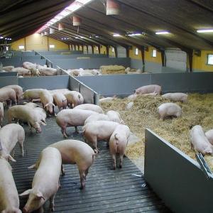 пластиковые панели для свиноводства, ПВХ панели днепропетровск купить, купить ПВХ панели, ПВХ панель для перегородок, пвх панель киев купить, пластиковая перегородка, пластиковая, перегородка, аммиака, разделительная перегородка, ограждение, пусто-занято,